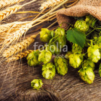 Barley and hop cones on  rustic wooden background. Beer brewing